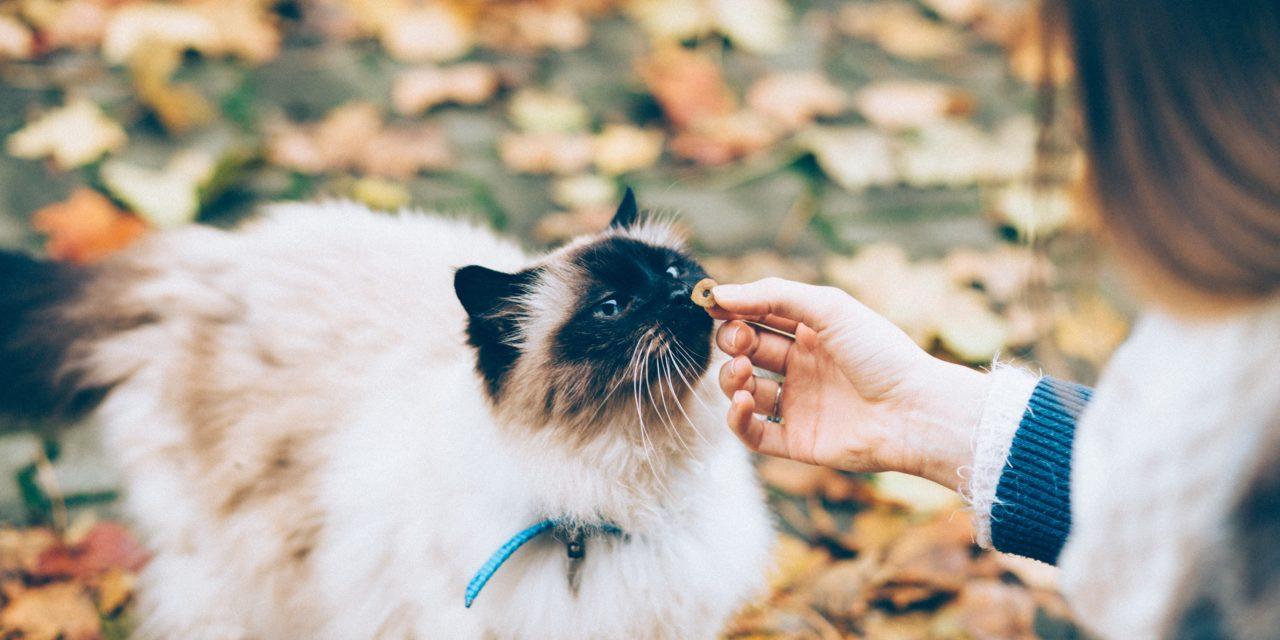 Alimentation sans Céréales pour chat, est-ce une bonne idee ?