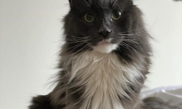 Les aliments humides pour chat, pourquoi les choisir ?